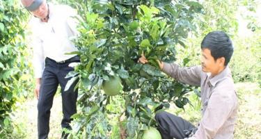 Phát triển kinh tế từ vườn đa cây